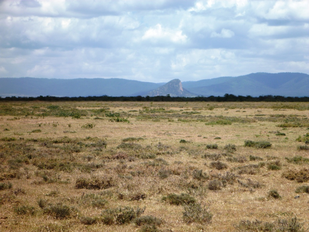 Potential Forest in Northern Kenya